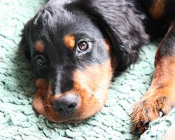 A New Puppy. Oh Joy.
