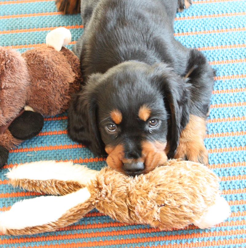 pup with toy