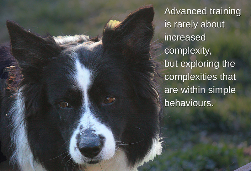 Advanced training is rarely about increased complexities but exploring the complexities that are within simple behaviours.