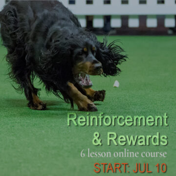 reinforcement and rewards