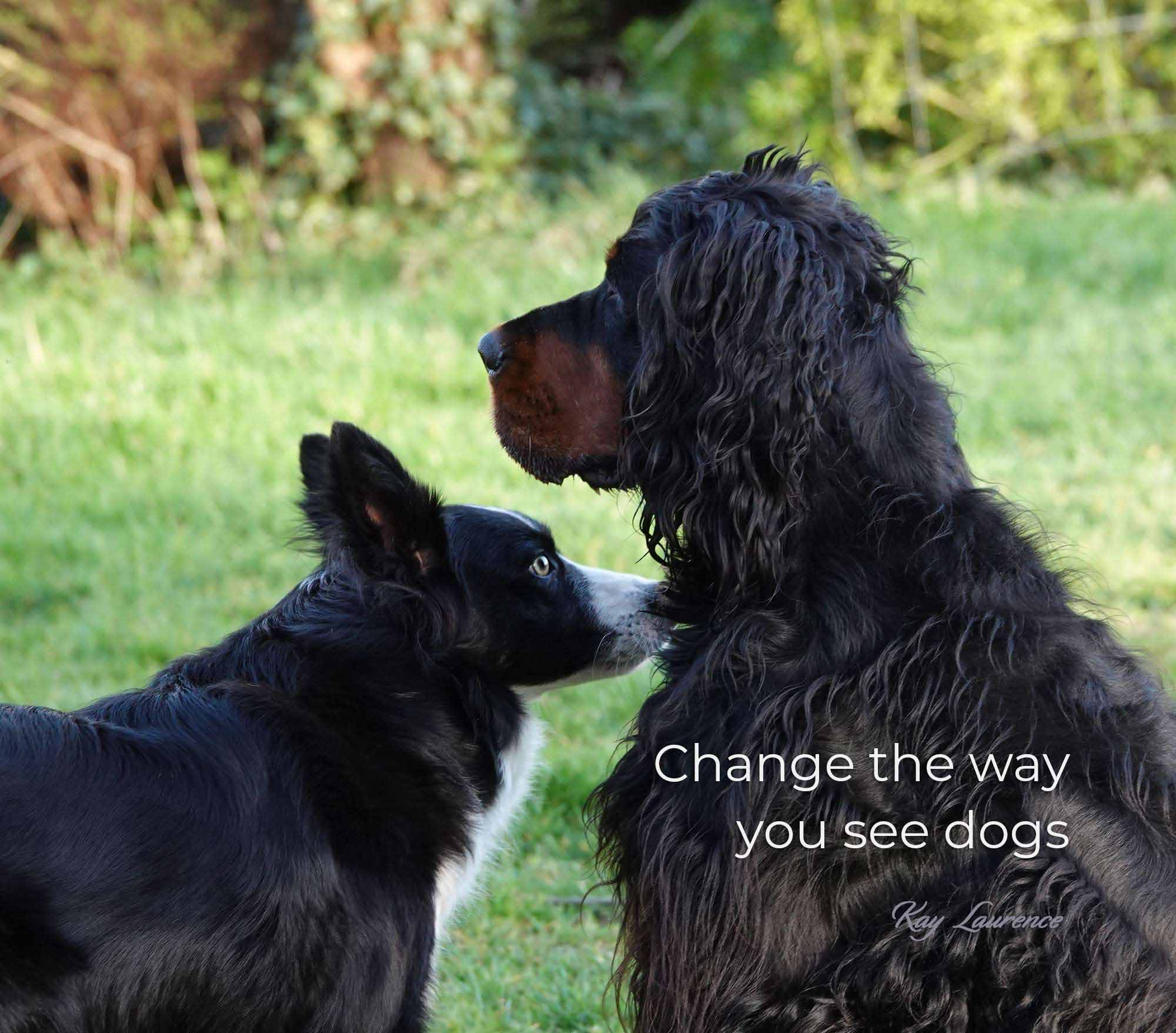 change the way you see dogs
