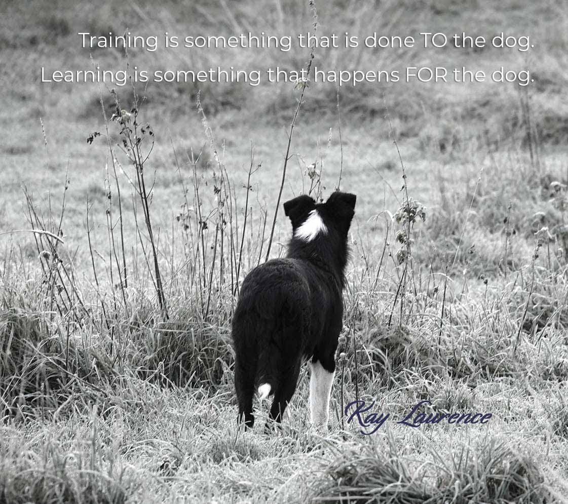 Training is something that is done TO the dog. Learning is something that happens FOR the dog.