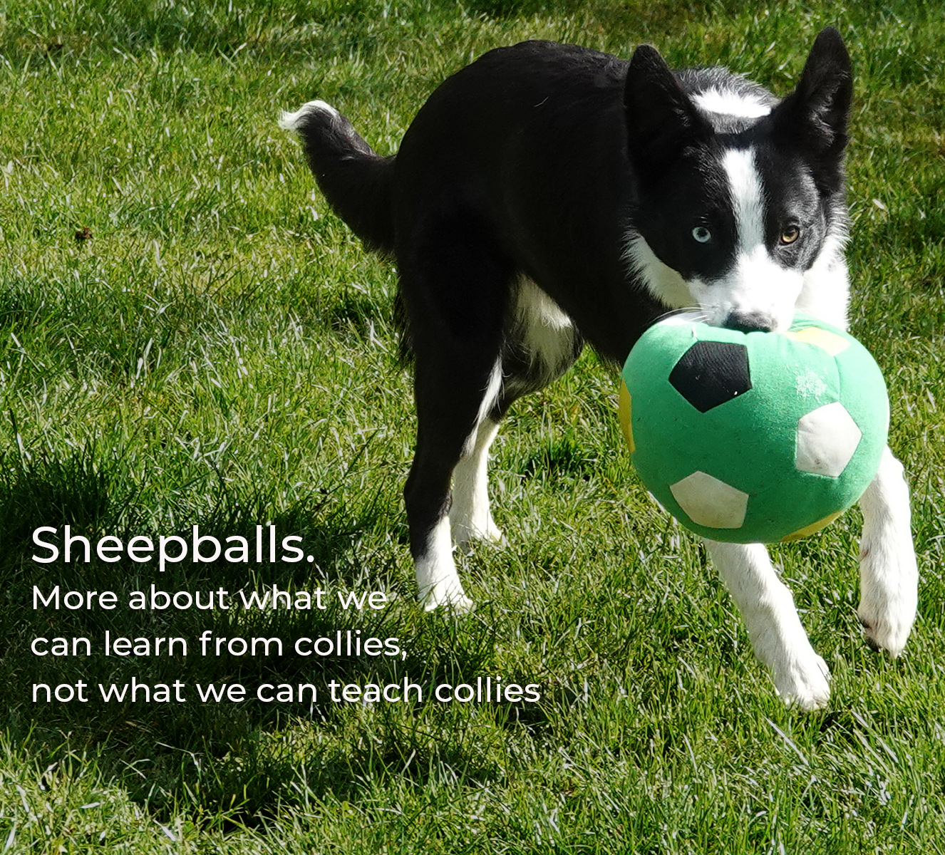 sheepball school